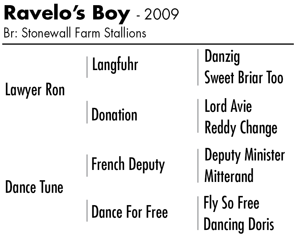 Ravelo S Boy Daily Racing Form